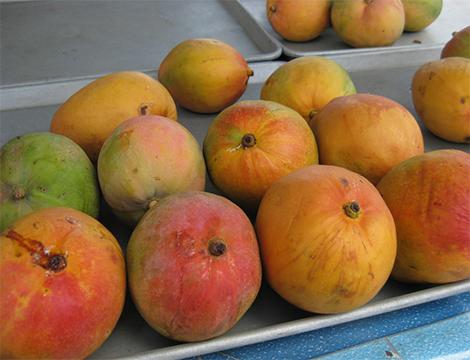 les fruits les plus chers du monde mangue autralienne