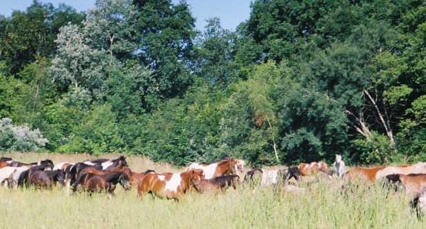 Animaponey, nopalito, poney, enfants, sortie